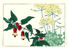 African wood-sorrel and trailing abutilon (Japanese Flower and Bird Art) Tags: flower art japan japanese book african picture abutilon malvaceae oxalis woodblock nihonga konan woodsorrel pescaprae trailing oxalidaceae megapotamicum tanigami readercollection