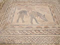 P5261394 (lnewman333) Tags: africa ancient northafrica mosaic historic worldheritagesite morocco fez maroc maghreb fes volubilis romanruins unescosite 1stcenturyad