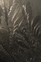 20140119-DSC_0026 (shmikov) Tags: frostwork