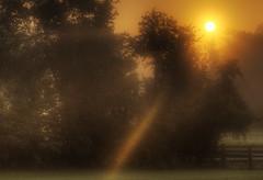 Beam Of Light (Klaus Ficker) Tags: light usa sun nature weather fog sunrise canon spring kentucky beam rays lightbeam eos5dmarkii kentuckyphotography klausficker