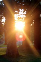 Light through the trees (Benn Gunn Baker) Tags: park trees light sun church st canon bristol george fiesta baker view watching balloon sunny launch mass trudi rd benn gunn bethan 2015 atia 550d t2i