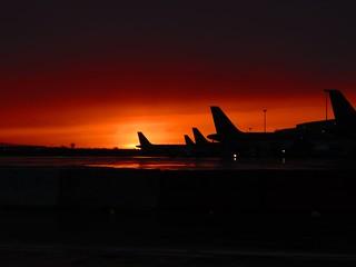 Tails at sunset DAP 14-12-2916