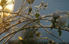 Winter (Natali Antonovich) Tags: winter tervuren belgium belgie belgique snow frost nature christmas christmasholidays landscape light bird