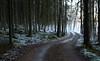 Cold Road (tonibjörkman) Tags: cold hanko forest trees 2017 nikkor sea road suomi finland nature kylmä tie