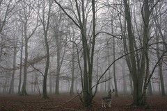 Rencontre insolite (Louise Lemettais) Tags: animals forest woods normandie today sauvage love canon automne automn winter foggy fog lovely beauty daim franc france alone lost patience animaux foret balade perdu