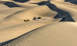 *Island in the desert*