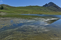 lago Thures, Thures lake (paolo.gislimberti) Tags: paesaggi landscapes mountainlandscape mountains montagne acqueferme stillwaters reflections riflessi vegetazionelacustre lakevegetation prateriaalpina alpinegrassland
