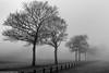 Heath Park and Runcorn Hill (1 of 8) (andyyoung37) Tags: heathpark runcorn silhouette uk cheshire fog tree