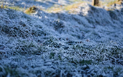 This night it gets colder again (glasseyes view) Tags: glasseyesview frost frozen frosted winter cold colder wintertime grass hoarfrost pasture