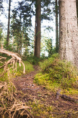 Dunkeld Hermitage 2017-05775 (garypatersondesign) Tags: dunkeld perthshire perth scotland forest trees