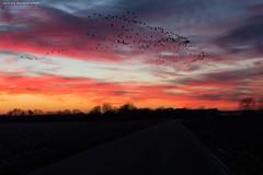 Sunset Weeze Kevelaer (Wilde Bildereien) Tags: sunset kevelaer weeze niederrhein gosse gänse wolken cloud