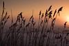 good morning sunshine (Rainer D) Tags: 2017 sun sunshine goodmorningsunshine sunrise inthemorning snow landscape skyline field outdoor plant gras