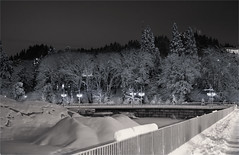 SNOWY TREES-55880-82 (Terry Frederic) Tags: canon5dmkiii lightroom68processed night oregon photoblend photoshop portland sharpener2013 silverefexpro southwaterfront streetscene streets terryfrederic topazadjust5processed topazdenoiseprocessed usa
