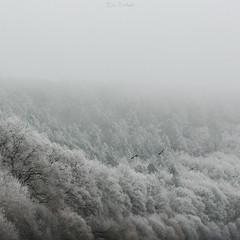 Les Cormorans II (erictrehet) Tags: winter hiver sauvage birds oiseaux nikon 70200