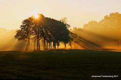 Naturscheinwerfer (grafenhans) Tags: nebel sony natur feld alpha 55 tamron bäume sonnenaufgang baum sonnenstrahlen slt farben grafenwald 281750 slt55
