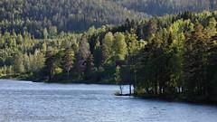 20150612078249 (koppomcolors) Tags: sweden sverige scandinavia värmland varmland koppom skillingmark koppomcolors