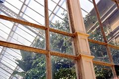 (Jan Phoenix) Tags: 00019 35mm analog film janphoenix hivernacle greenhouse
