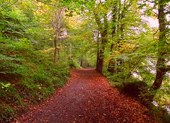 Leafy Footpath! ('cosmicgirl1960' NEW CANON CAMERA) Tags: autumn trees brown green nature leaves gardens parks plymouth devon footpath yabbadabbadoo saltram