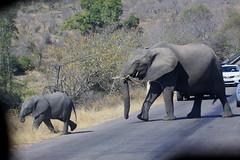 Kruger National Park. Elephants. July/2015 (EBoechat) Tags: park safari national elephants kruger elefante july2015