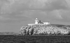 Farne (iancowell123) Tags: northumberland farnislands