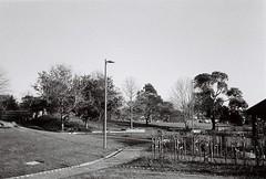 Tim Neville Arboretum in black-and-white (Matthew Paul Argall) Tags: park trees tree footpath