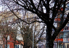 Old Trees (Linnea from Sweden) Tags: canon eos 40d ef 28135mm 3556 is usm building house