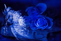 6 Nightwish (evisdotter) Tags: bluewhite flowers roses rosor feather fjäder 2in1 myart nightwish