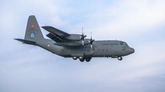 TuAF C-130 (lee adcock) Tags: c130 mildenhall nikon1685 nikond5300 nookcampsite tuaf816 turkishairforce