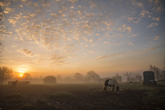 Golden Morning (Ashley Hemsley) Tags: landscape skyscape cloudscape explore flickr view moment capture artist art unique shot angle serene fileds horse animals wildlife horses cold morning early start season winter sunrise sun rise color beauty nature orange blue white green horizon distance foreground tree walk travel visit canon camer 5d dslr photography scenery weather fog mist focus point hailsham east sussex uk england united kingdom south marshes