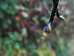 """"""" Drop """" (seanwalsh4) Tags: drip raindrop water bokeh closeup nature nice sean walsh bristol weather raining wet sunshine elegant sweet shining festive winter"""