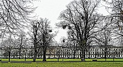 In the deep Midwinter... A very cold day last week in Montpellier Gardens, no birds about with only the sound of traffic in the distance to disturb the silence... HSS