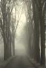 incerte destinazioni (Buon anno a tutti gli amici di Flickr) (mat56.) Tags: paesaggi paesaggio landscapes landscape nebbia fog misty viale path alberi trees pianura padana livraga lodi lodigiano lombardia incertedestinazioni atmosfera atmosphere monocromo monochrome antonio romei mat56