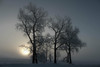 Still Dreaming (OnTheMarkPhotos.com) Tags: winter tree trees frost onthemarkphotos dakota sun sunrise mood dreaming ngc