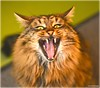 I'm a tiger (mayflower31) Tags: katze cat kater face gesicht