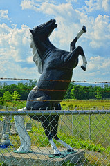 Don't Fence Me In! (creepingvinesimages) Tags: horses fence nikon statues ornament lawnornaments shenandoahvalley topaz highway340 d7000