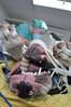 laparoscopie 3  Kliniek voor dieren Woerden
