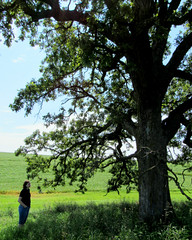 wise old oak (quirkyjazz) Tags: oaktree lonetree oldoak thattree plattevillewisconsin