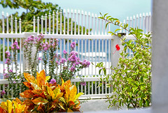 View from the Veranda (Violet aka vbd) Tags: wedding plant flower beach fence costarica pentax k3 hff 2015 vbd smcpentaxda55300mmf458ed happyfencefriday spring2015 lmwcr