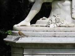 Robin Red Breast (SandyEm) Tags: robin statuary nationaltrust cambridgeshire angleseyabbey gardenstatuary 10may2015