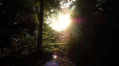 Into the Light (benn.clarke) Tags: uk trees light sunset england sky sunlight silhouette yellow skyline nikon shadows hampshire sunbeam sunray lensflair horizons lightstreaks beautifulearth yellowsky sunstreak supershots reflectionoflight