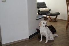 Cosette_224 (leeder-five) Tags: cosette rin pflegehund