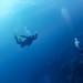 Free+falling+into+the+deep+blue+in+El+Quadim+Bay%2C+El+Quseir+%28Red+Sea%2C+Egypt%29