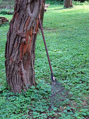 A Rake too Soon (Jae at Wits End) Tags: wood light plant silly tree green nature smile grass yard rural america fun outside illinois woods midwest funny shadows exterior outdoor country humor lawn rake american tool turf sod edwardsville