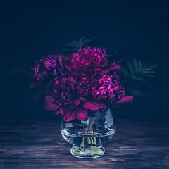 Peonies (RoCafe on/off) Tags: peonies stilllife flowers lowkey textured nikkor105mmf28 nikond600