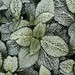 Texture of veined leaves