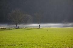 vallée du célé (lionelfausser) Tags: winter tree valley midipyrénées quercy lot valléeducélé brume hiver calme douceur