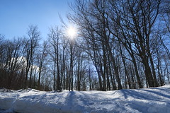 I've been for a walk on a winter's day... (alekathom) Tags: winter nature outdoor mtpilion volos greece snow forest sun sky clouds
