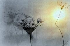 Collage33  my winter (profmarilena) Tags: art artwork winterlandscape fantasy nature pastel creative winter sun
