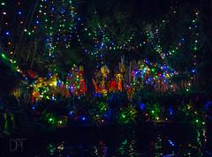 Night Time on the Jingle Cruise (Domtabon) Tags: adventure adventureland california christmas dl dlr disney disneyland disneylandresort jinglecruise holidays mousewait