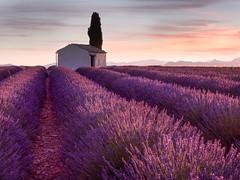 Purple Lane (v-_-v) Tags: valensole provencealpescôtedazur frankreich fr lavender purple south france südfrankreich sunrise sky landscape farmhouse hut barn tree mountains explored